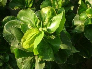 Green1a