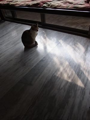 Cat1blog