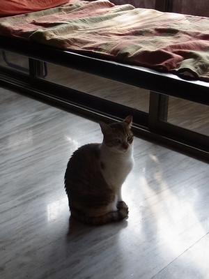 Cat2blog